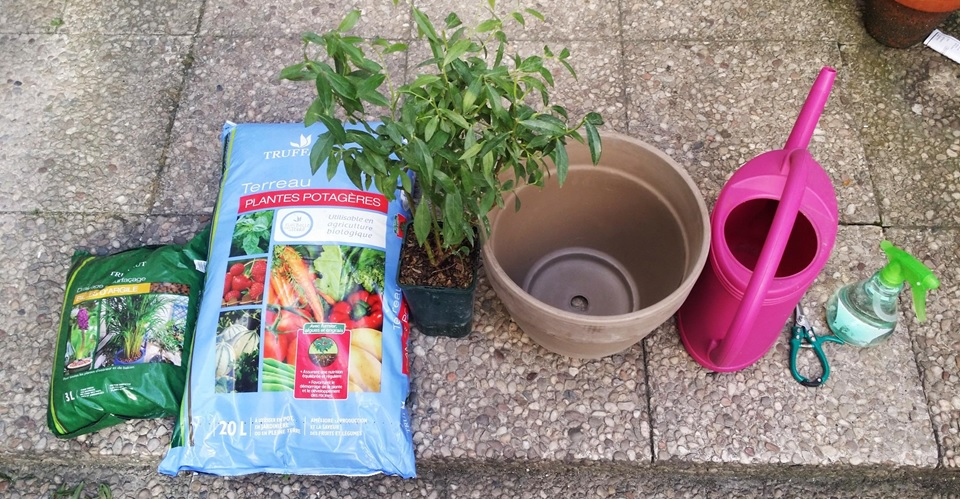 WENHUA DUVERGÉ - Want to plant fruits at home? Let's go !